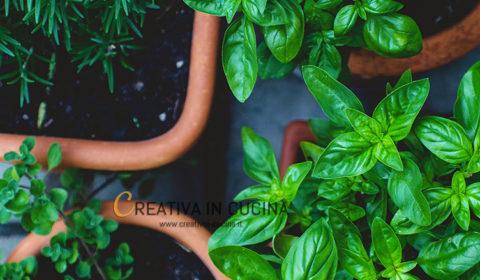 Basilico, proprietà e valori nutrizionali