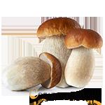 funghi porcini creativaincucina