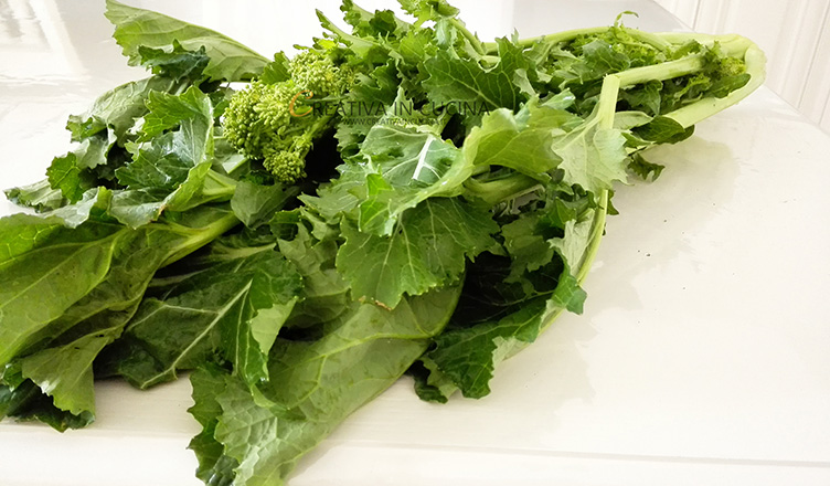 Cime di rapa, benefici, proprietà e come pulirle