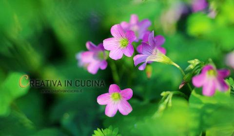 I fiori commestibili più utilizzati e come mangiarli