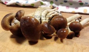 Funghi pioppini sott'olio